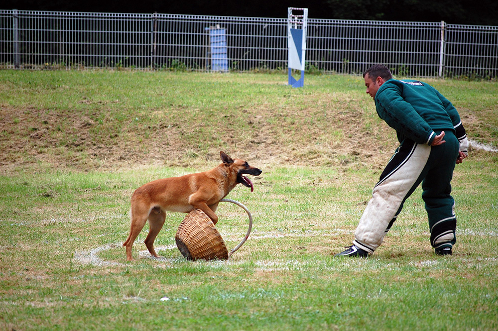 Urgo ring malinois
